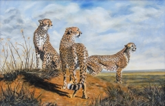 Cheetahs on High